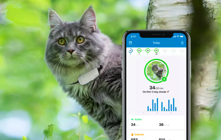 collier traceur gps tractive pour chat