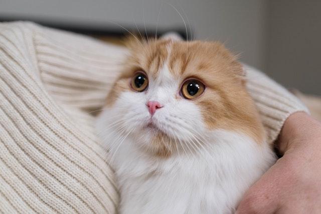 chat calin heureux