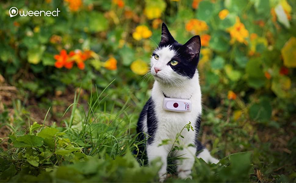 collier gps weenect cat 2