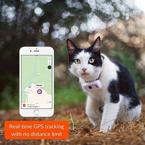 application weenect cats 2 avis